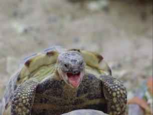 Kilpkonnadel on kevad