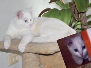 3 kuune  ja 2 a.Kitty