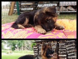 Miia 2 kuune ja Miia 1 aastane
