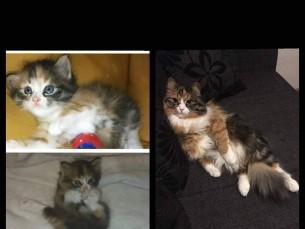 Missy 1 kuune ja Missy 3 aastane