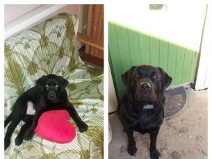Sämmi 3kuusena ja 2 aastasena!