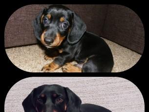 Meie armas taksipoiss Felix: 2 kuuselt ja 5 aastaselt. :)