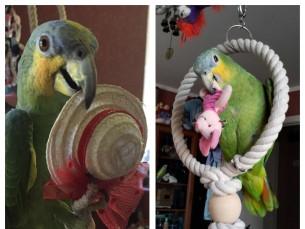 Dora 1. aastaselt ja 2. aastaselt