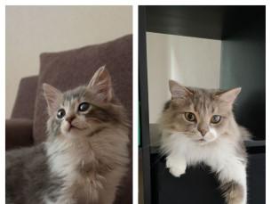 Cliff, 7 a väga vahva kassipoiss