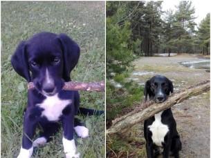 Iti 2 kuusena ja 2.5 aastasena, pulgad ikka lemmikud