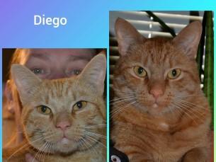 Diego vanust ei tea, 2 aastat tagasi tuli meile ja jäi.
