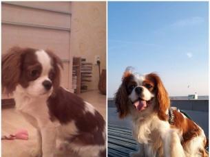 Pepe 3 kuune ja 3 aastane :)