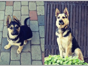 Betty (4-kuune vs 5-aastane)