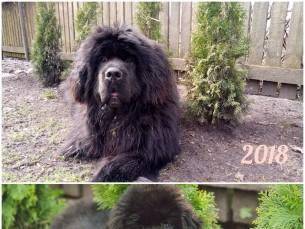 10 kg koera ja rohelised puud, 70 kg koera ja mustad puud