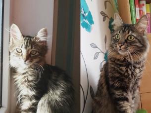 Esimesel 5 kuune ja teisel 3 aastane Fonte.