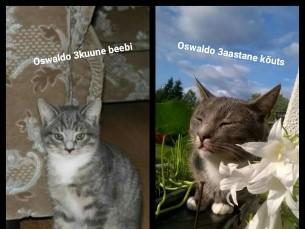 Meie isepäine Ossu :)