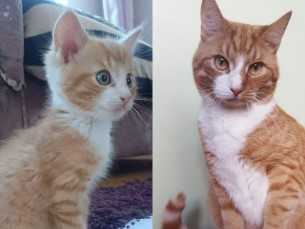 Harri 2 kuud ja 2 aastat