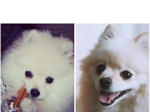Sisse Zara 2 kuune ja 5 aastane