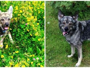 Meie hundu Rafael 3 kuud vana vs 3 aastat :)