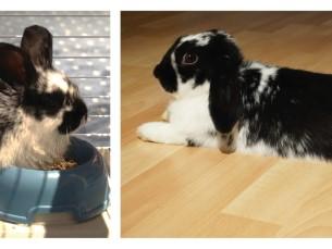 Meie Jännu 1 kuuse ja 2 aastasena :)