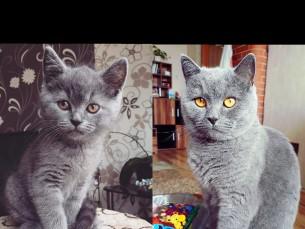 Hugo 3 kuud vs 3 aastat ❤