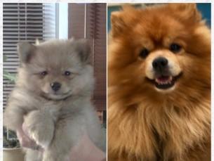 Swartz 2 kuune ja 8 aastane