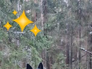 Sõbraga metsas