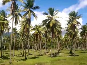 Reisivideo (SiimPaasII)