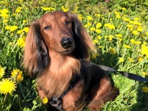 Liisa nautimas kevadpäikest