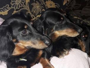 Loola koos ema ja õega (Loola esimene)