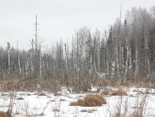 Talvine soo