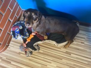 Miia lapitehnikas ase. Meie koer Miia sai vanast tekist aseme, mille kujutis on just Miia pikaliasendi moodi. Magamisase on välja lõigatud lapitekist, kaunistatud koerapeakujulise aplikatsooniga ning ääristatud koeramustriga kangaga.  Miia armastab väga oma pesa, lisaks meeldib talle haukuda, kaevata ja mänguasju närida.
